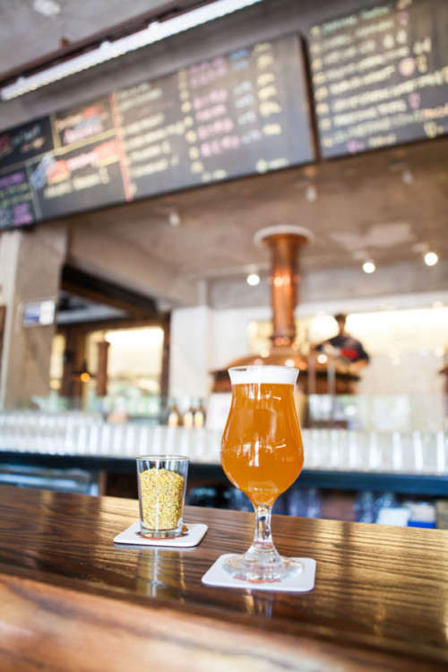 A bluffers guide to craft beer in beijing bespoke travel co for Guide to craft beer